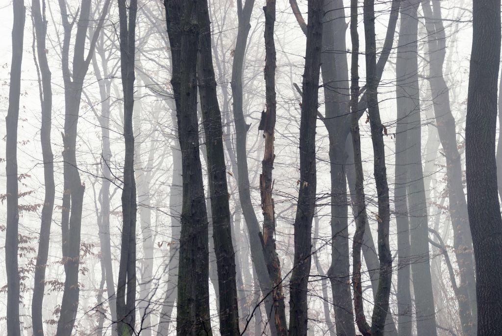 Misty Forest in winter, Austria