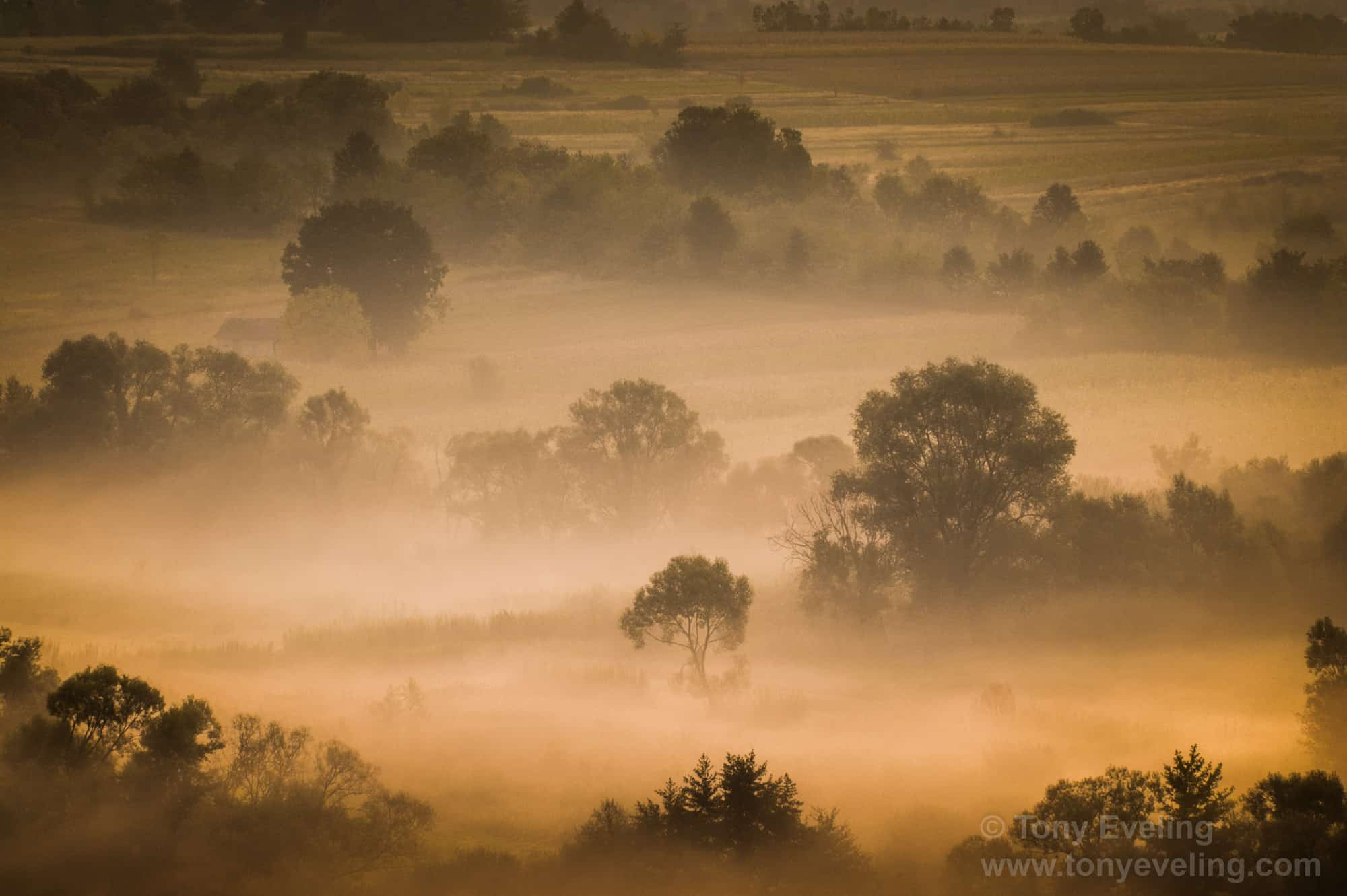 Misty morning at dawn.  Wallachia Province, romania
