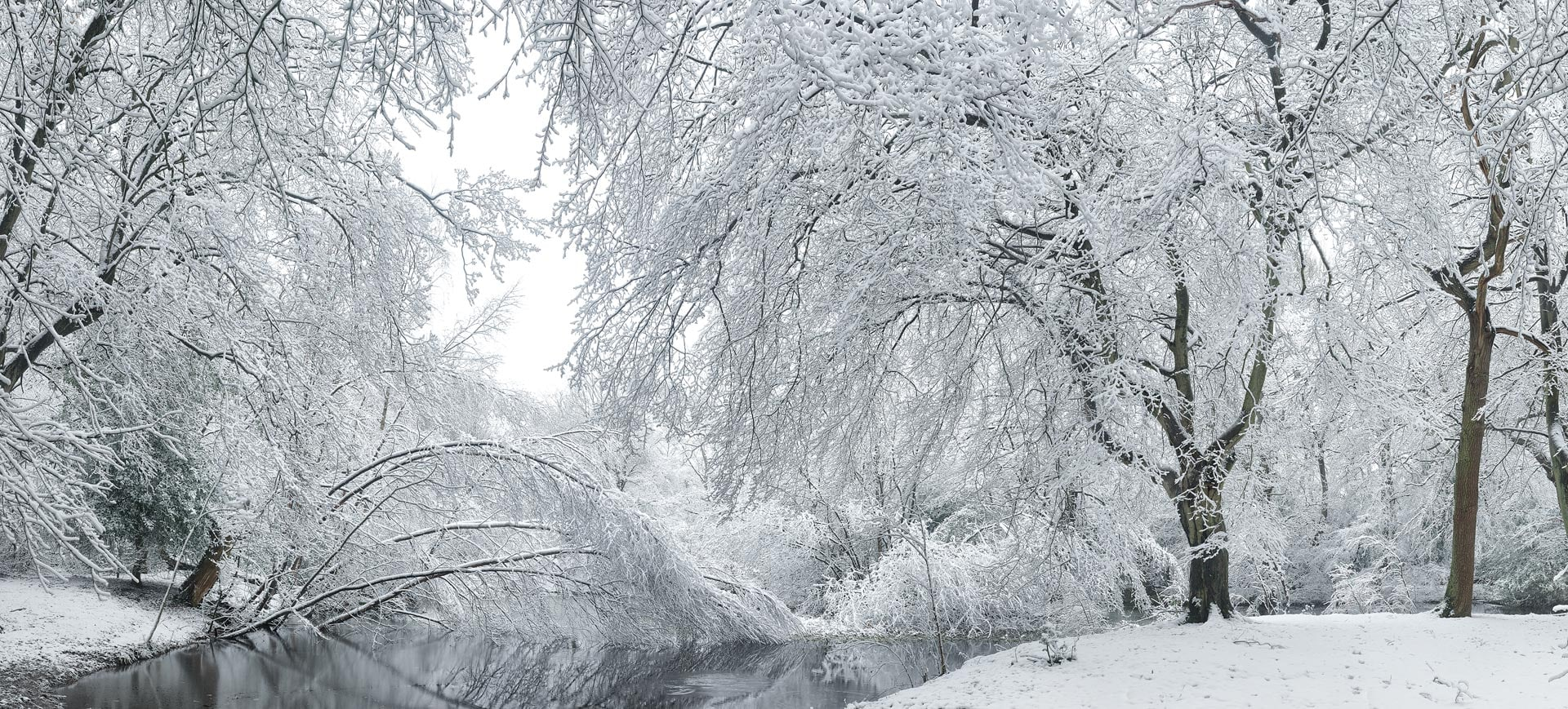 Snowy landscape, Epping Forest, Essex, England, UK