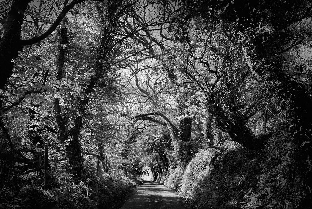 Narrow country lane, surrounded by trees and forest