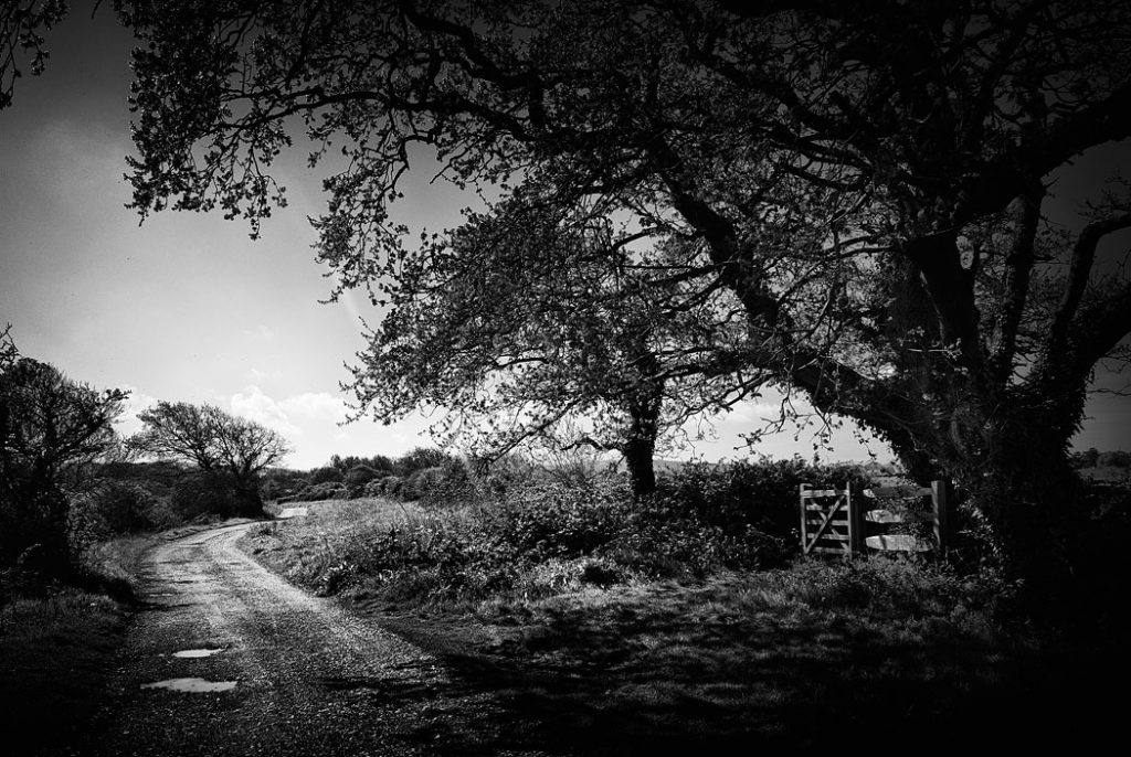 Black and white photograph of a countrylane on the Isle of Wight, UK