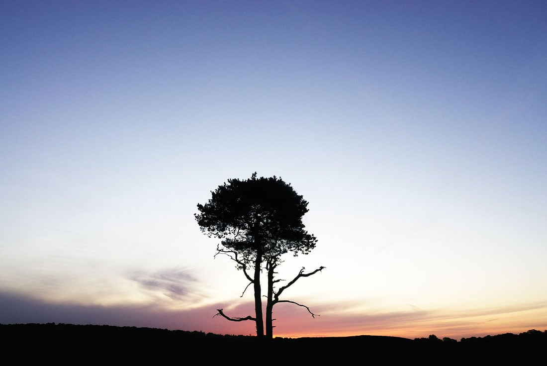 Lone tree, New Forest NP, hampshire,england,uk