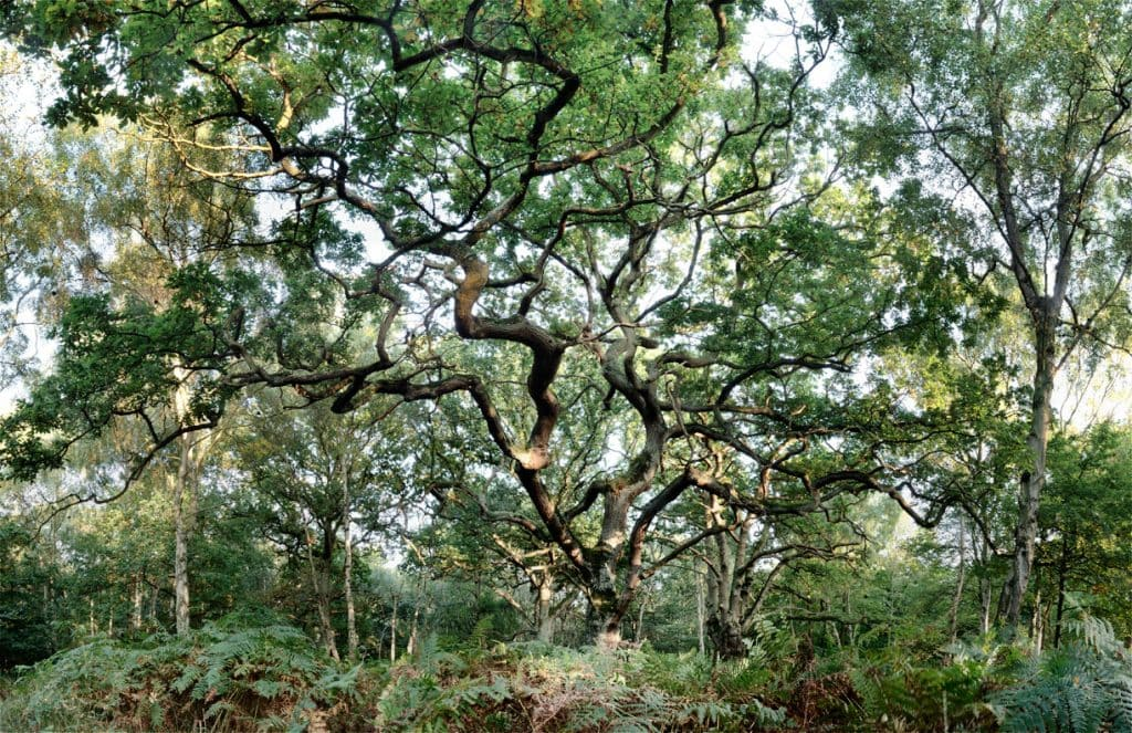 Epping Forest, England, UK