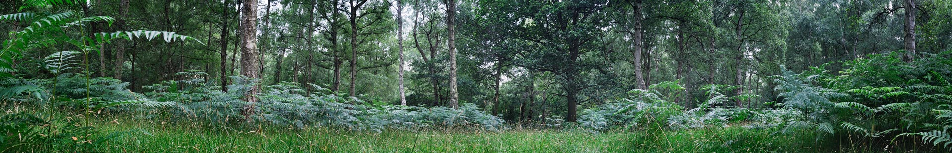 Forest, Ashridge Park, Hertfordshire, England, UK