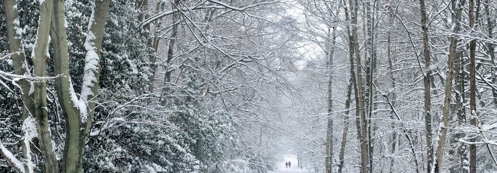 Dog walkers in a snowy forest. Epping Forest, England, UK