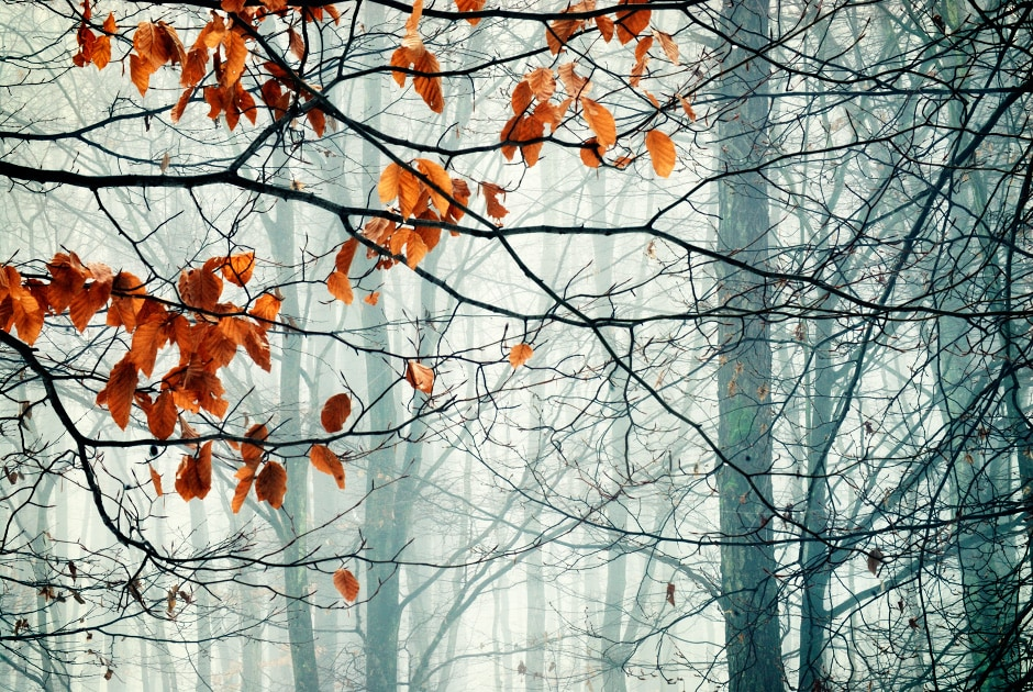 Forest in winter, Croatia