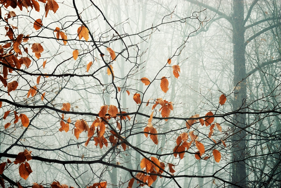 Gallery – forests and trees