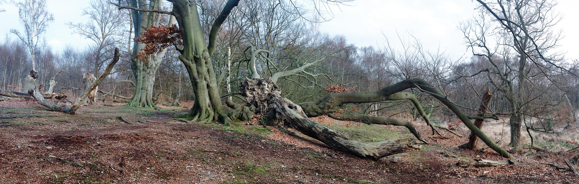 Epping Forest in winter, Essex, England,UK
