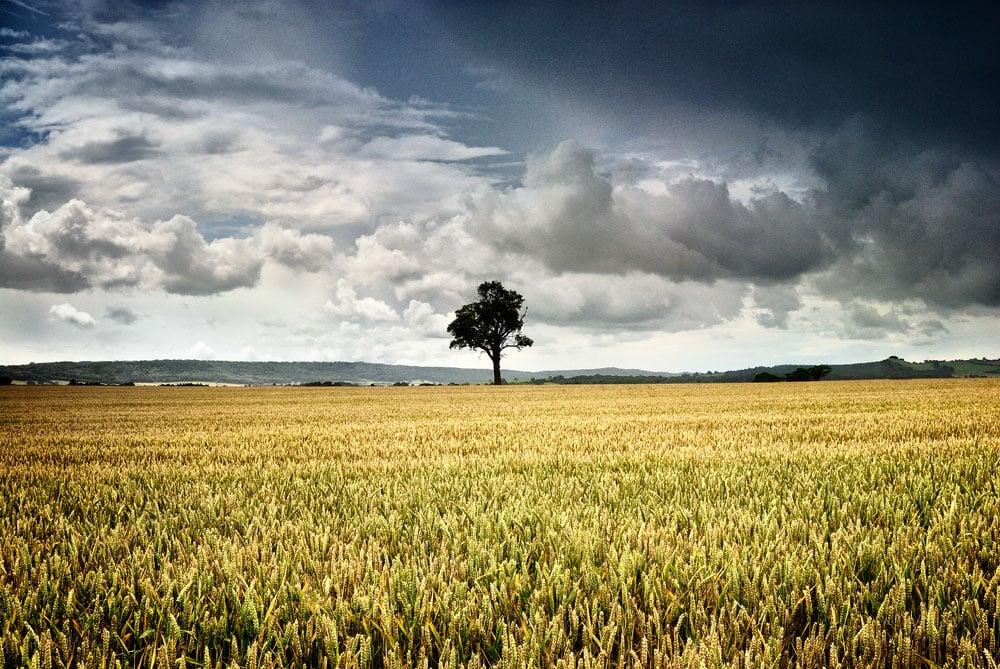 Farmland of the Shropshire countryside, England,UK
