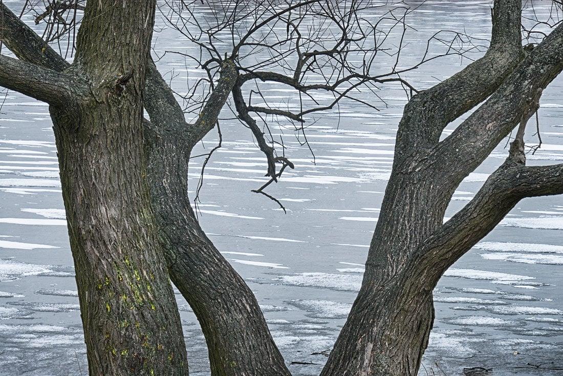 Tree and ice, Czech Republic