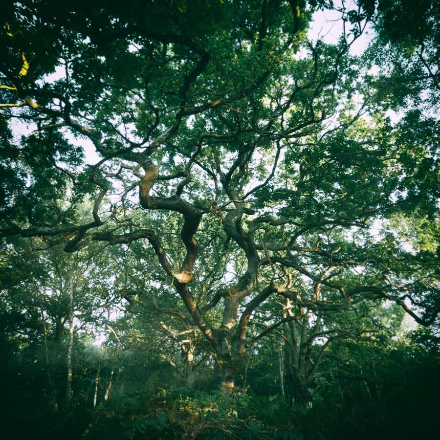 9eppingforest