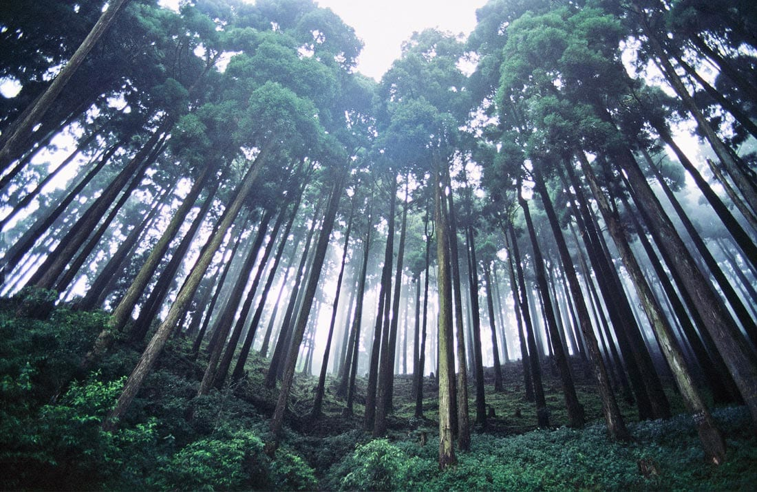 Forest in Darjeeling District, India