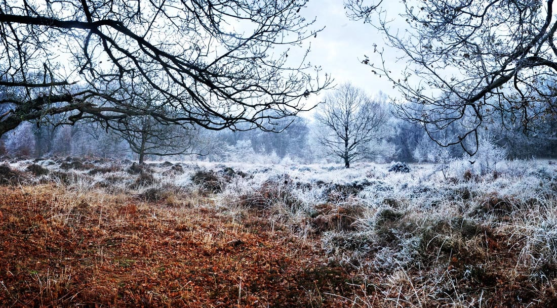 Epping Forest in winter