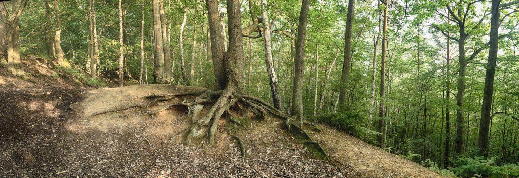 An example of a multi image panoramic photograph. Oldbury Hill, Sevenoaks, Kent, England, UK.