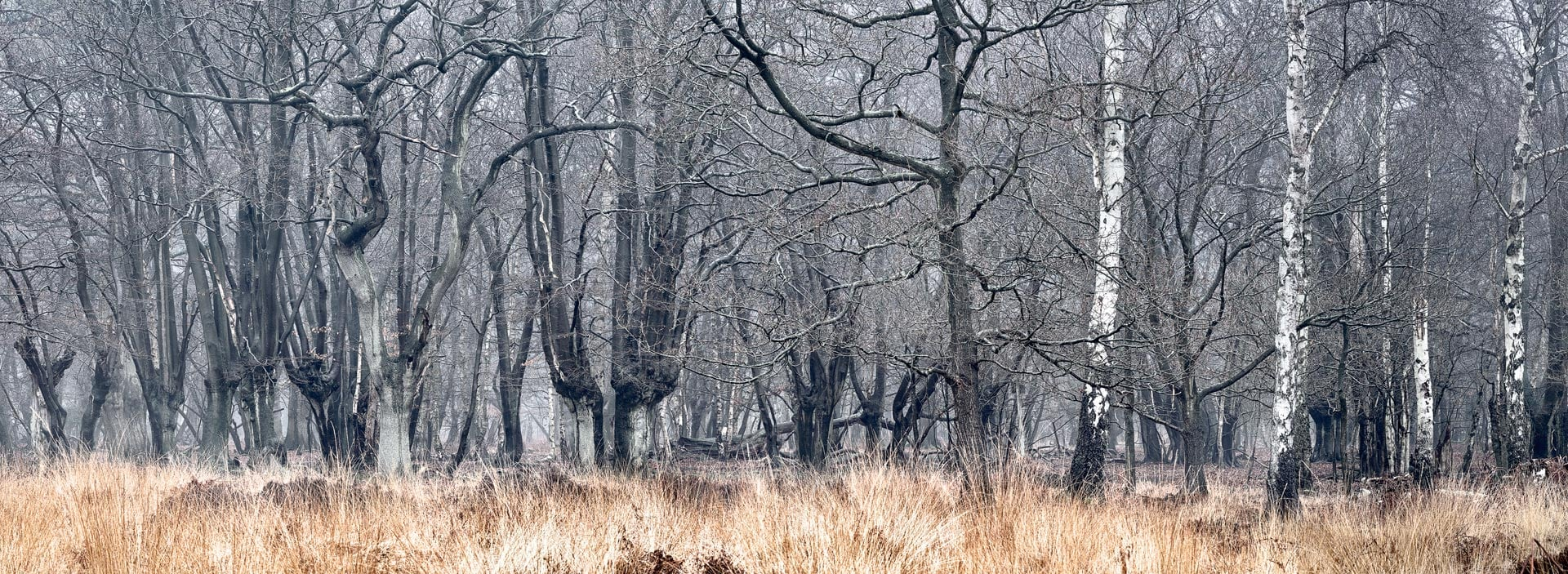 Forest view in winter. Epping Forest, Essex, England, UK
