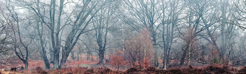 Epping Forest, Essex, England, UK
