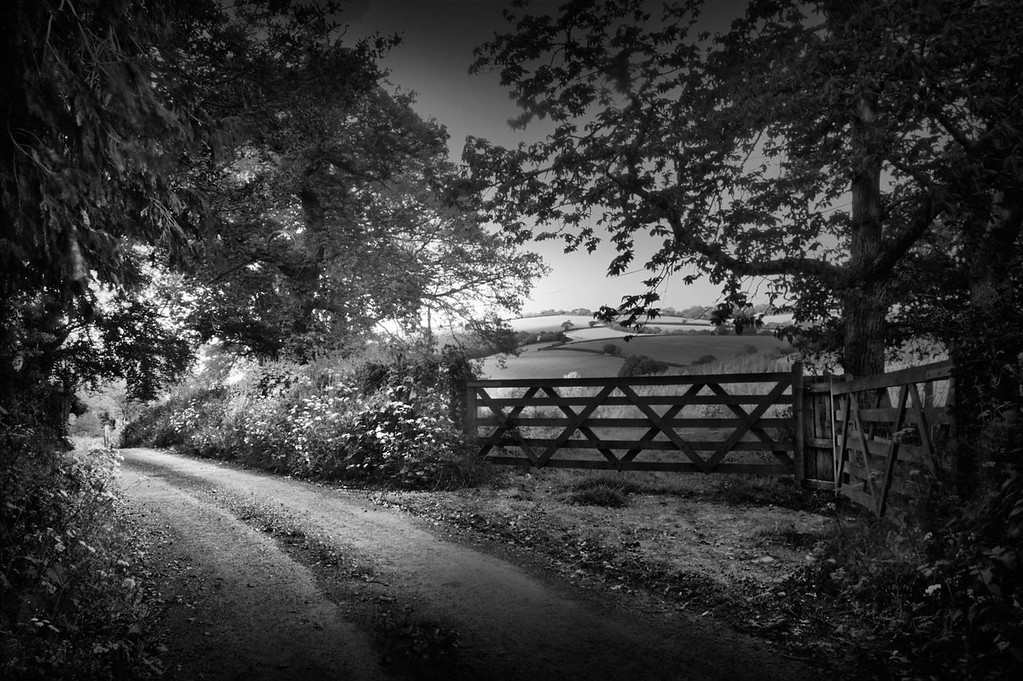 Black and white conversion. Narrow countryland in the Devon Countryside,
