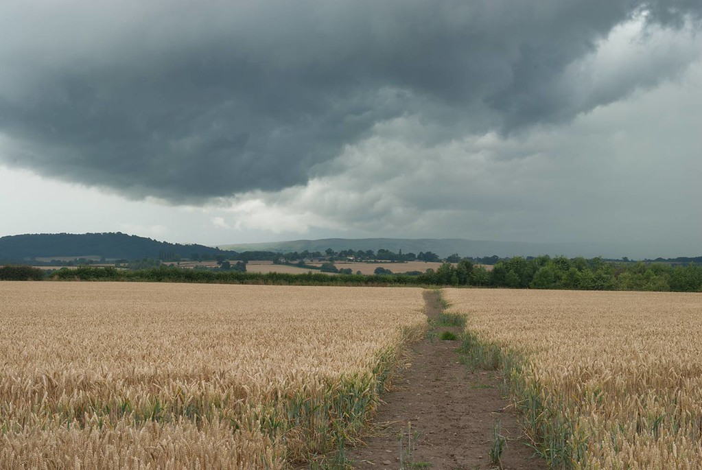 Example of a photograph taken before any post processing is applied. Wheatfield, Shropshire, England, UK